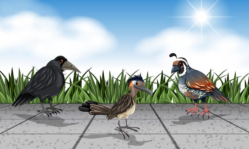 Different wild birds on the street