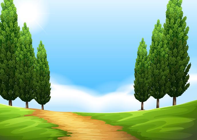 Cena da natureza com trilha e pinheiro