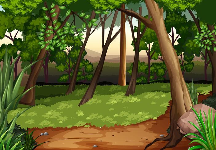 Escena con arboles y campo en bosque vector