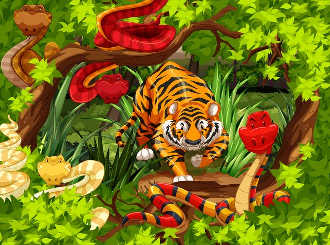 Wild snakes and tiger in the woods vector