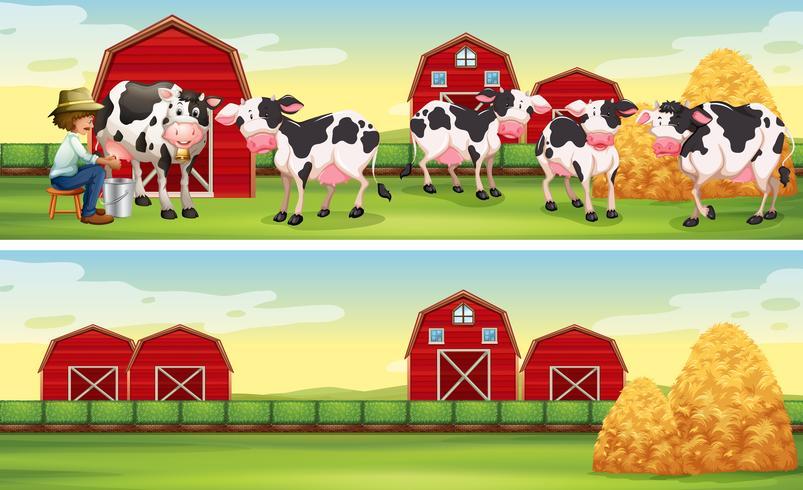 Agricultor e vacas na fazenda