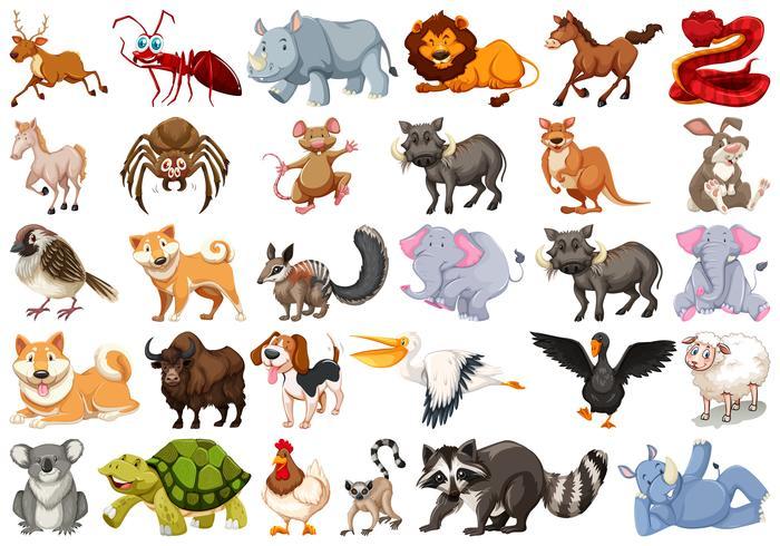 Uppsättning av olika djur