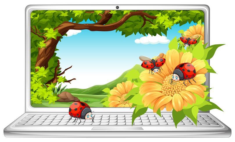 Ladybugs in garden on computer screen