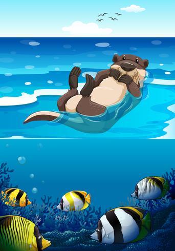 Zeeotter zwemmen in de zee