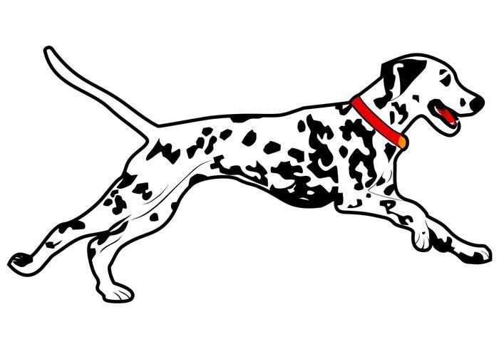 dalmatian dog run vector illustration