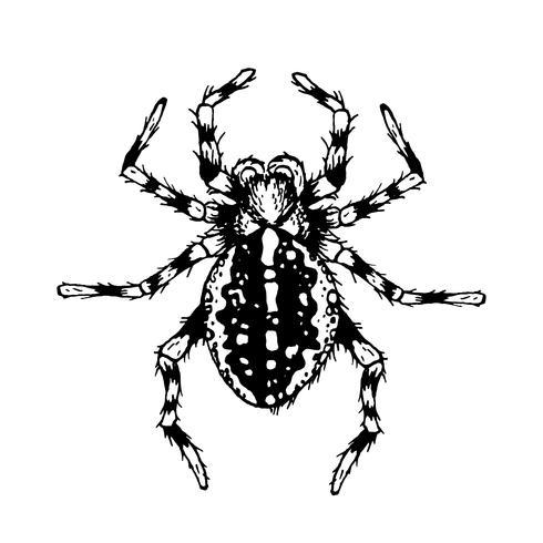 Araña de blanco y negro.