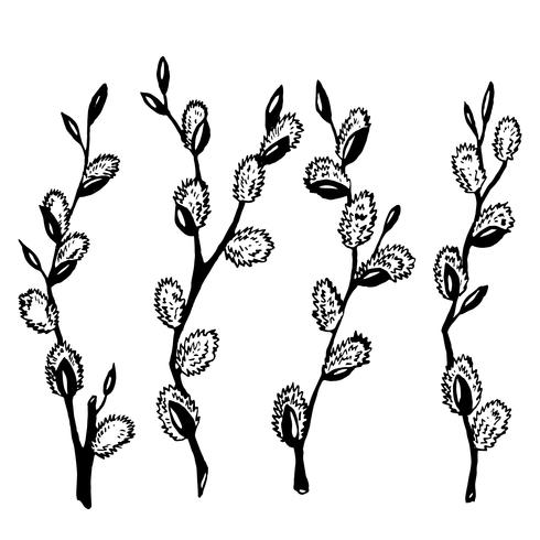 Black and white willow branches. Graphics. Illustration. vector
