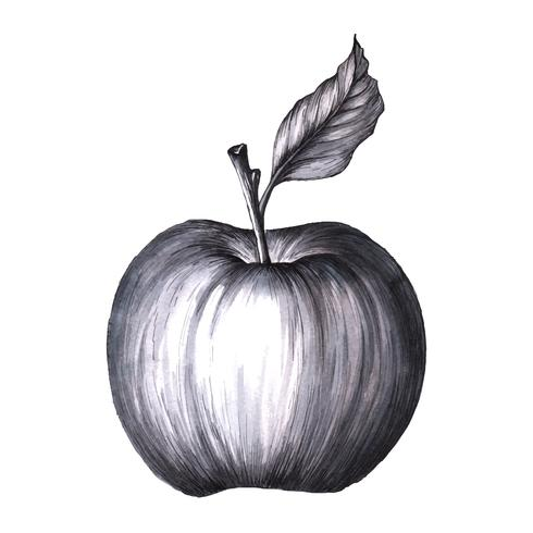 Black and white Apple.  vector