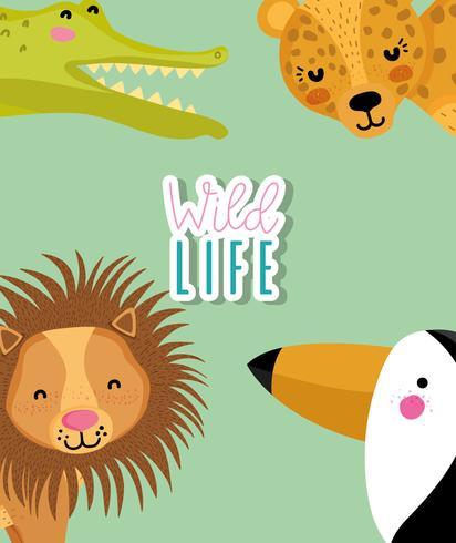 Wildlife cute animals