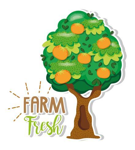 Productos frescos de granja