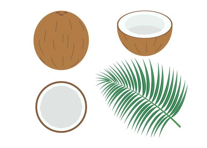 Vector l'illustrazione della noce di cocco fresca stabilita isolata su fondo bianco
