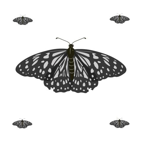 Illustration vectorielle de papillon volant Realstic