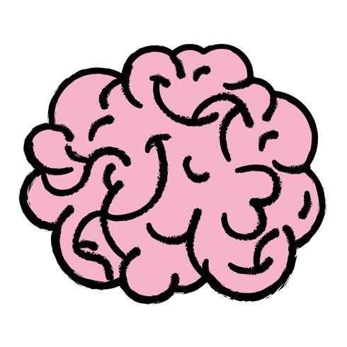 anatomia do cérebro humano para criativo e intelecto