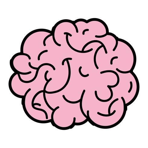 human brain anatomy to creative and intellect