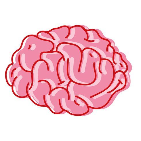 l'anatomie du cerveau humain à la créativité et à l'intellect
