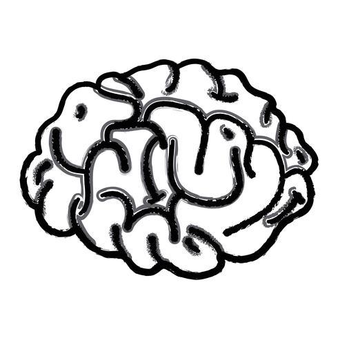 Figura anatomía del cerebro humano a creativo e intelecto. vector