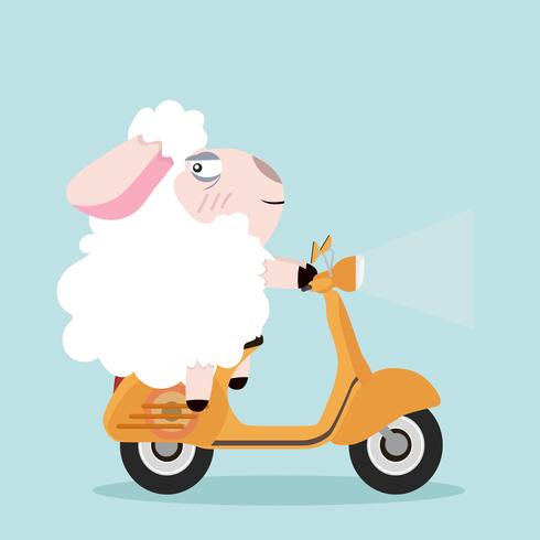 cute sheep with yellow scooter