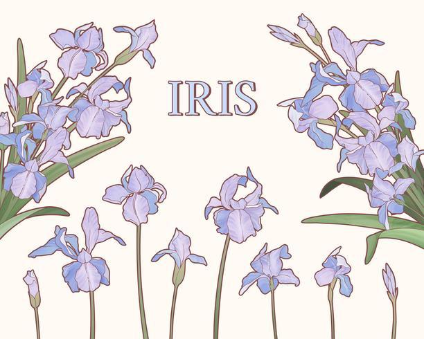 Lila Iris der Aquarellart
