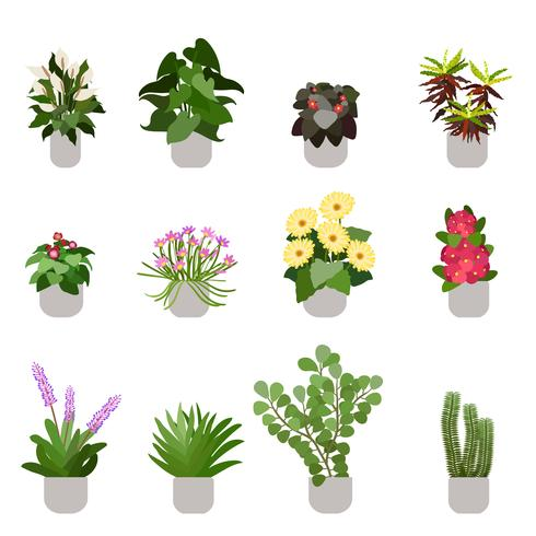 Diverse bloemen in potten, geïsoleerd op een witte achtergrond