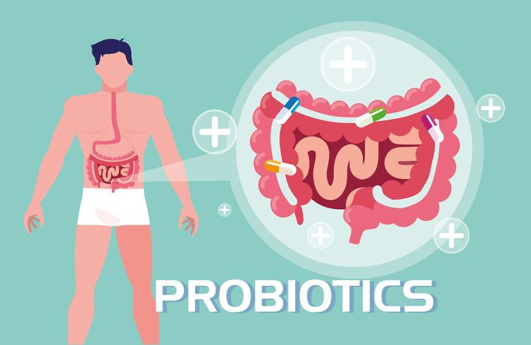 body of man with probiotics and digestive system