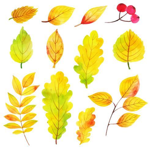 Aquarela folhas amarelas coleção vetor