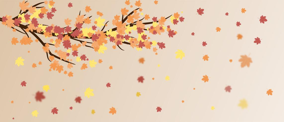 Leaves falling off tree