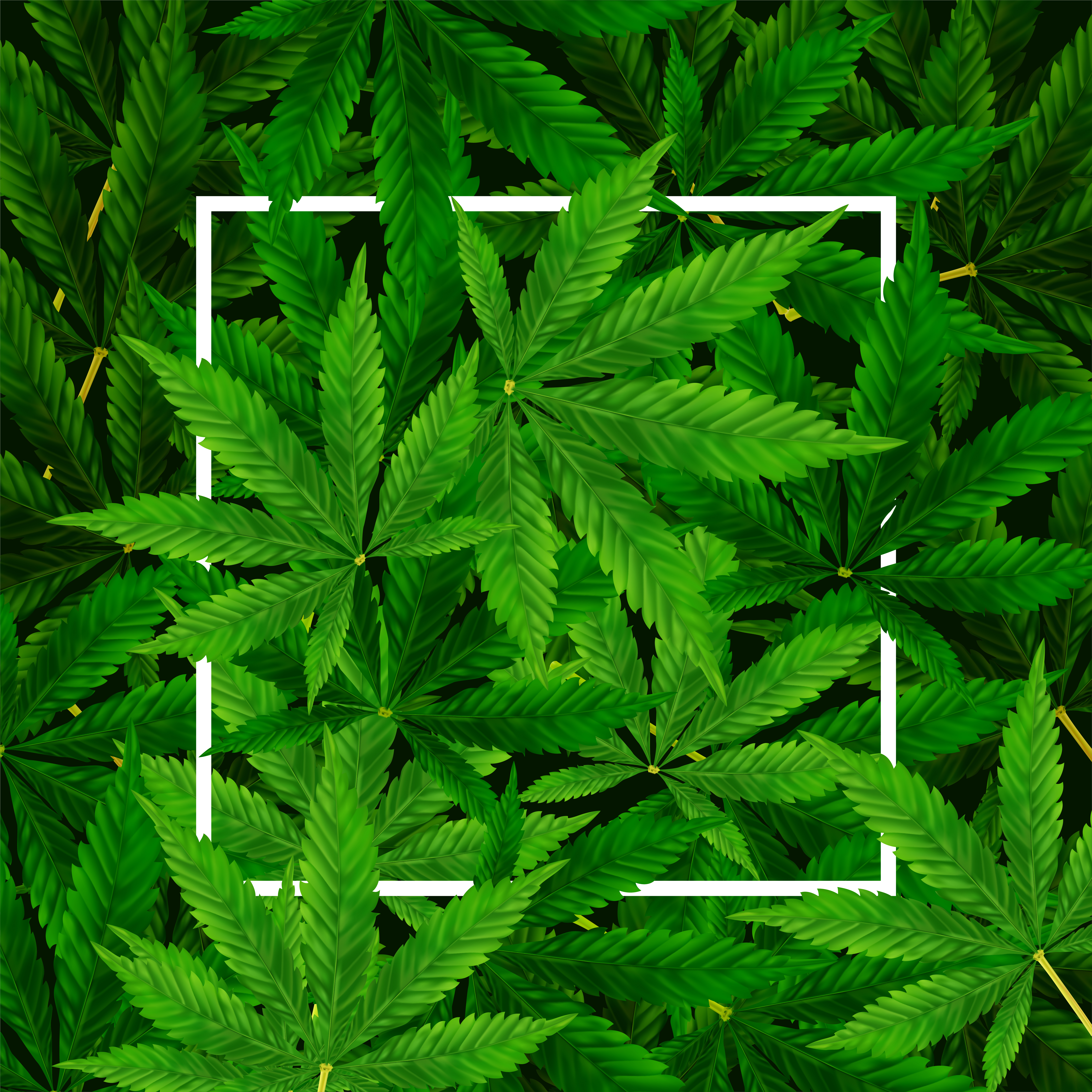 site rencontre weed