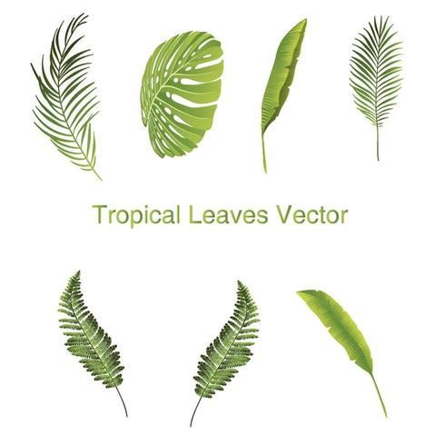 Set of Tropical Leaves Illustrations vector
