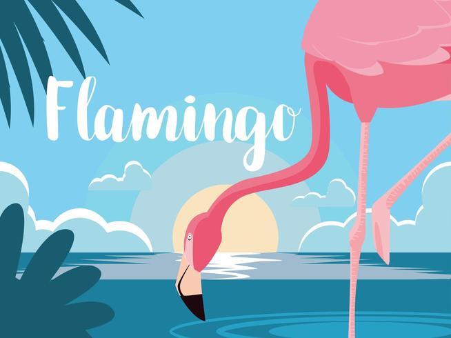 flamingo in water vector