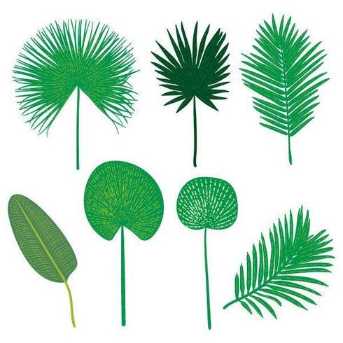Set de feuilles tropicales plates dessinées à la main Vector