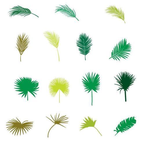 Ensemble de plantes tropicales plates dessinées à la main de vecteur