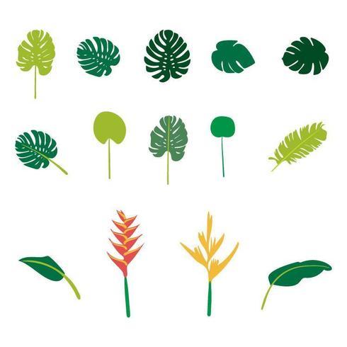 Ensemble de plantes tropicales plates dessinées à la main