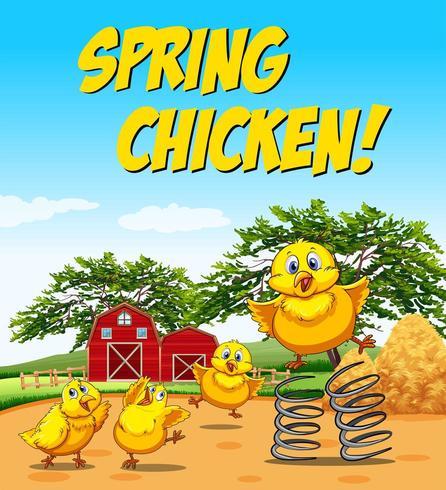Spring chicken and barn