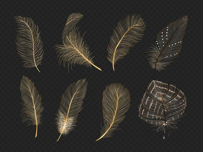 Gold feathers vector collection