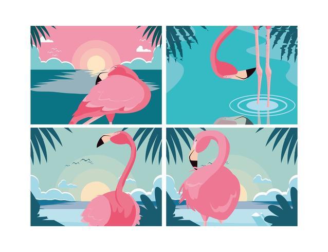 uppsättning vackra flamingos fåglar flockar