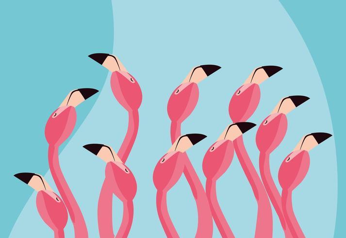 flamencos pájaros acuden cabezas vector