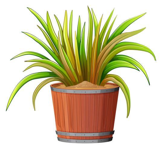 pianta in vaso di legno vettore