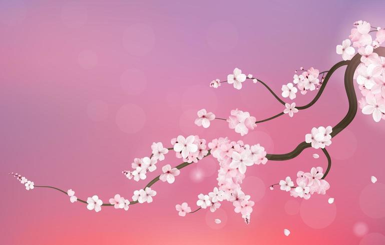 Ramo realistico della ciliegia di sakura Giappone