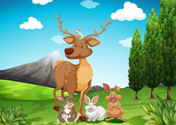 Ciervos y conejos en un campo