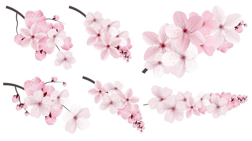 Roze Sakura-bloemen vector