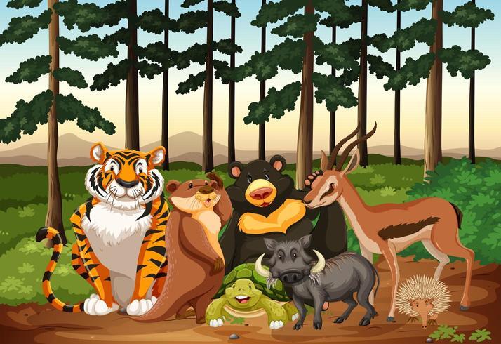 Animaux sauvages vivant dans la forêt vecteur