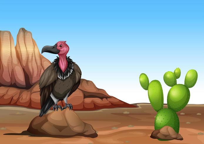 Buitre de pie en el desierto