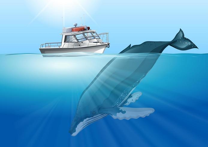 Whale swimming in the ocean under boat