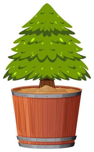 Un pino in vaso
