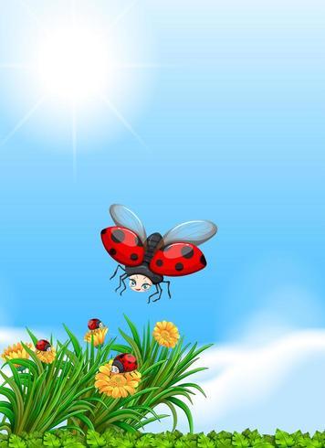 Coccinella che vola nel giardino