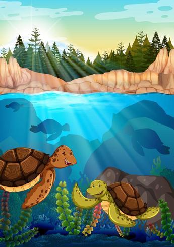 Schildkröten, die unter dem Ozean schwimmen