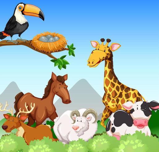 Vilda djur i ett fält