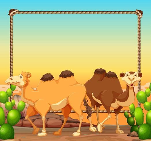 Modelo de quadro com dois camelos no deserto