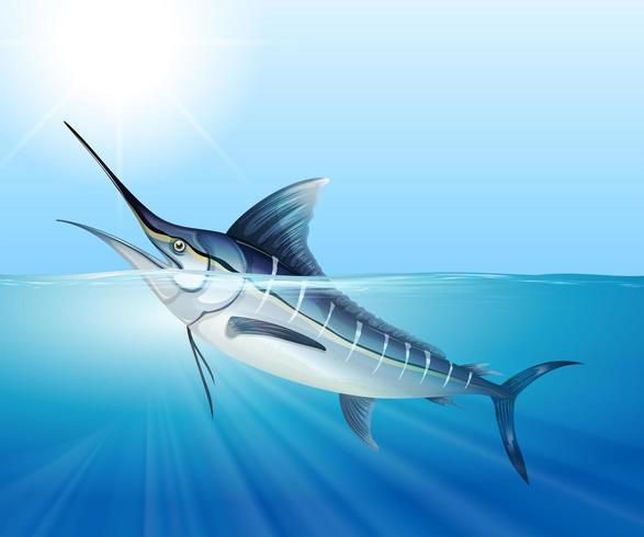 Nuoto del pesce vela nel mare