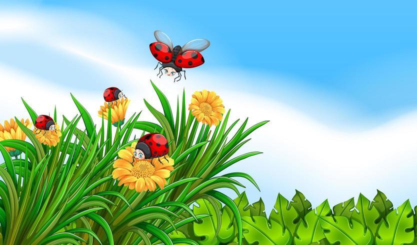 Cena com joaninhas voando no jardim